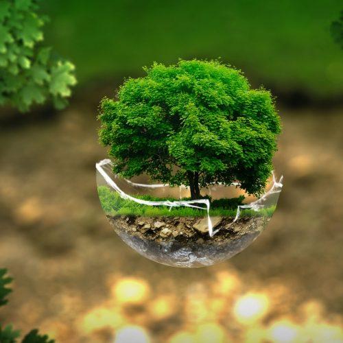 environment-2196690